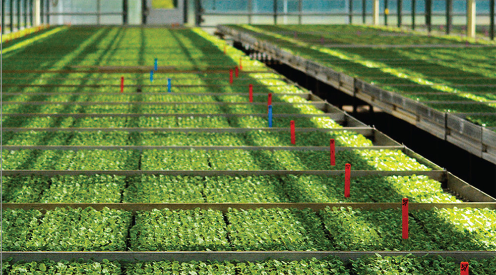 SBI Software maximizes the potential of young plant growers.